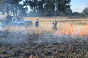 Cerca de 70 hectares foram consimidos pelo fogo na área da antiga Fepagro