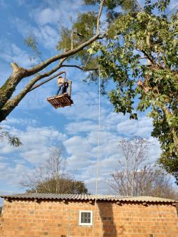Árvore com risco de cair é retirada pela Secretaria de Meio Ambiente